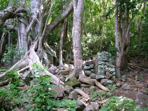 Tree-inFoundation1170